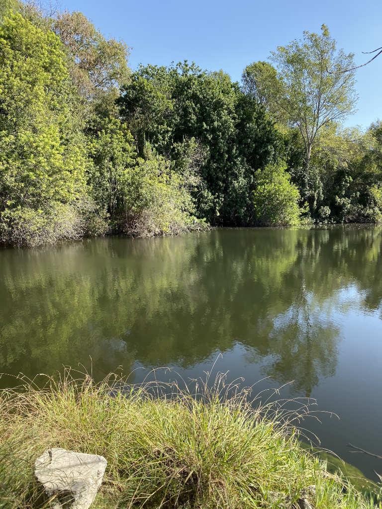 El Dorado Nature Center - Lake and Greenery