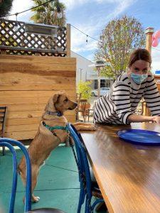 At Blue Dog Beer Tavern