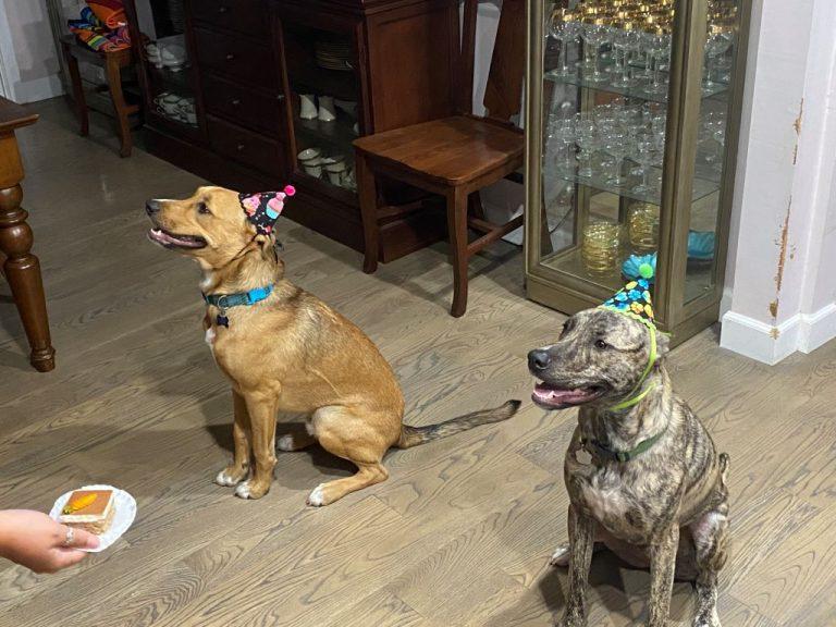2 Dogs with Three Dog Bakery toys and treats
