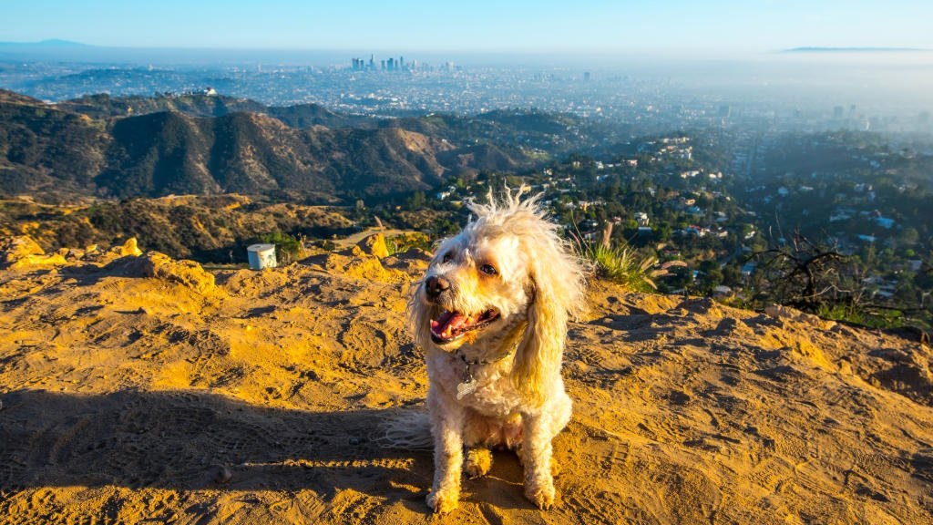 dog on top of Los Angeles